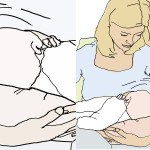 Wissen: Wie lange sollen Babys gestillt werden?